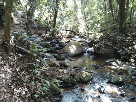 Parque Estadual da Cantareira - Nucleo Pedra Grande: Trilha