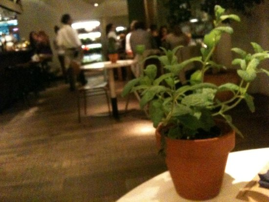 Bar Lobo : An herb on your table instead of flowers
