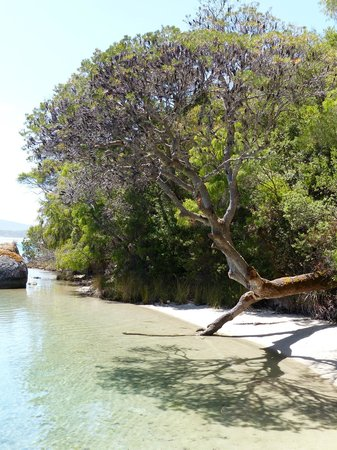 WOW Wilderness Ecocruise: Moored at the jetty