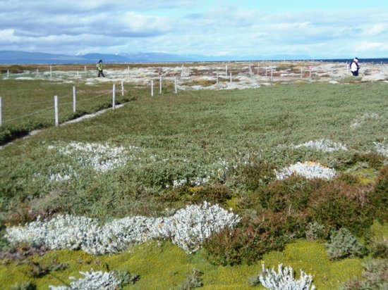 Otway Sound & Penguin Reserve: Snow-capped Andes in the distance across Otway Sound from the penguin reserve