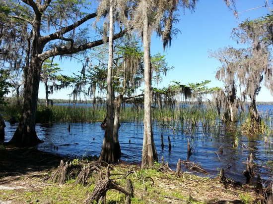 The Disney Wilderness Preserve: Russell Pond