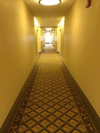 Candlewood Suites - Detroit/Ann Arbor: Hallway