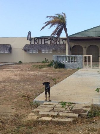 Kite-Inn: Kite Inn
