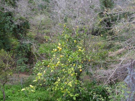 Zorbas Island : kloofwandeling
