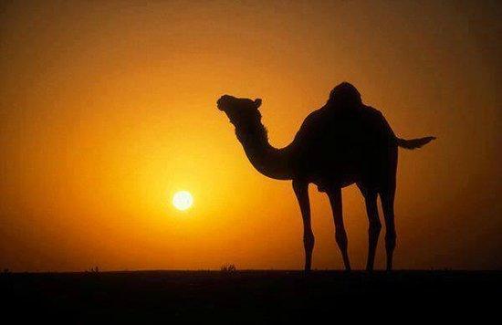 Wadi Rum Lovers Camp: Amazing