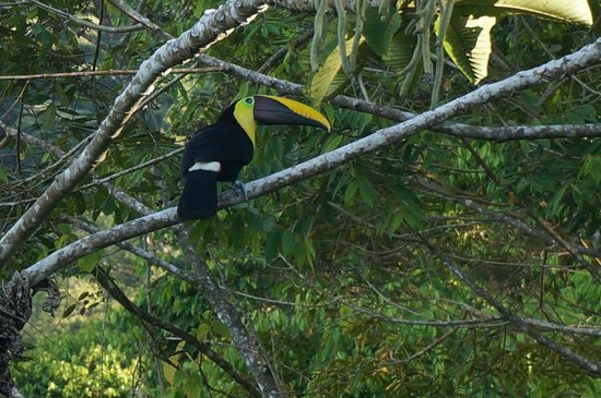 Rancho Pacifico : Waking to the Toucans