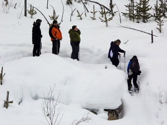 Banff Adventures : Sow Shoeing March 2014