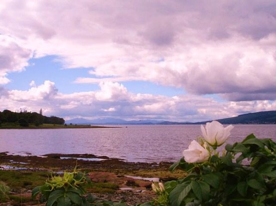 Cardwell Garden Centre Cafe: Lunderston Bay and rosa rugosa