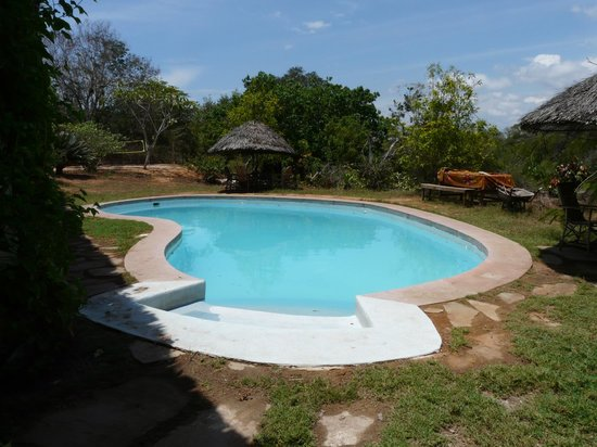 Distant Relatives Ecolodge & Backpackers : Pool & beach volleyball court