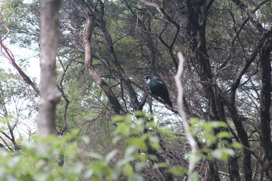 Habitat Tours : one of the many birds we saw in the forest