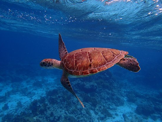 Bonaire Happy Holiday Homes: Hawksbill at Klein Bonaire