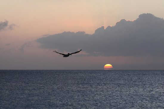 Bonaire Happy Holiday Homes: Sunset pelican across the street from HHH
