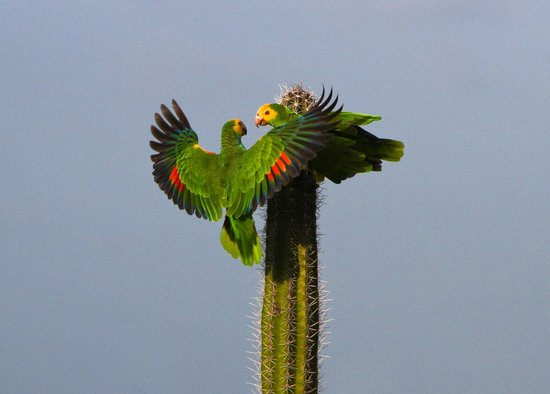Bonaire Happy Holiday Homes: Parrots at Omina beach