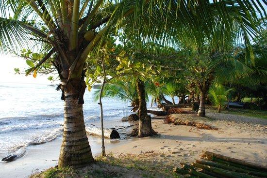 Popa Paradise Beach Resort : Front beach coconut trees
