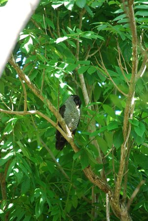 Popa Paradise Beach Resort : Black-and-white Owl by the lobby