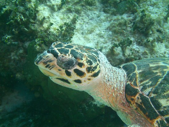 Cayman Brac Beach Resort: A new friend