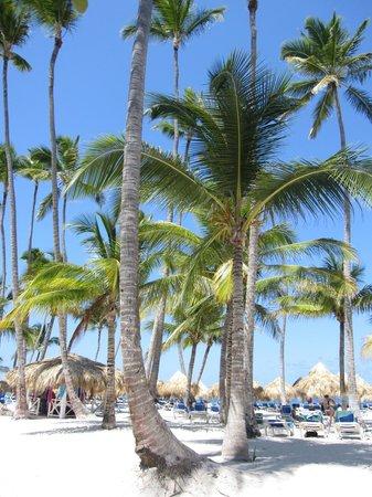Meliá Caribe Tropical: Beautiful Beach!