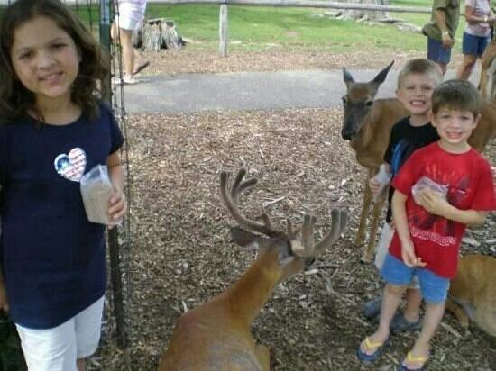 Wisconsin Deer Park: the kids love the deer