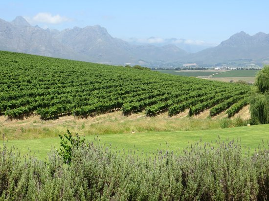 Asara Wine Estate & Hotel: Vineyard and mountains - view from patio
