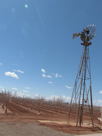 McGinn's Pistachio Tree Ranch : delish farm photo