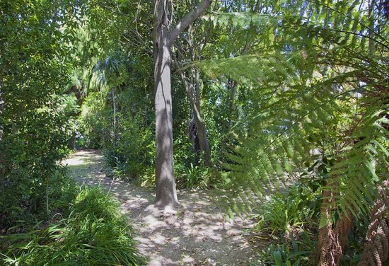 Watea Boutique Bed and Breakfast: Glade area with NZ Native trees for peaceful rest in the shade
