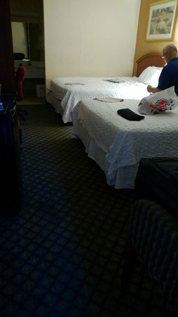 Motel 6 Gainesville : Bedding - if that is what you would call it