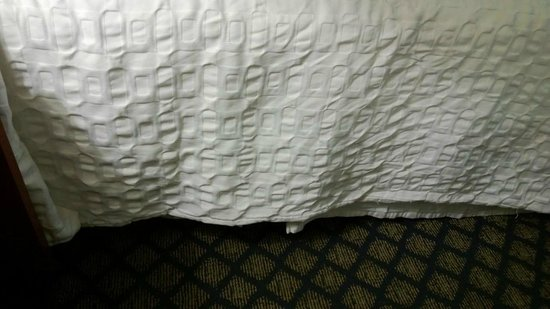 Motel 6 Gainesville : Bedding