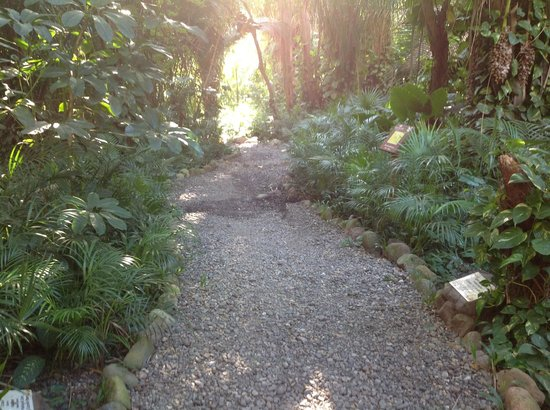 The Royal Suites Punta de Mita: One of the many paths