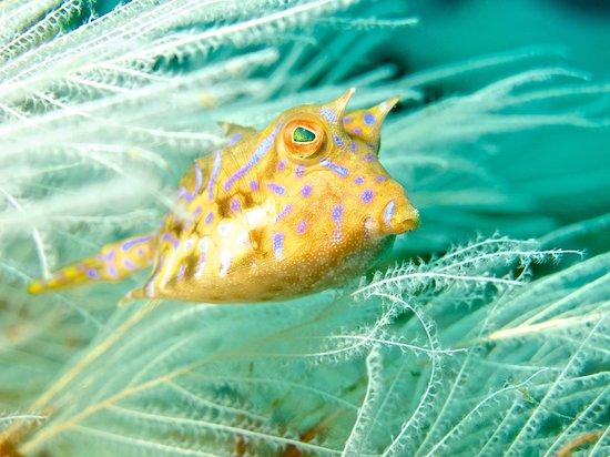 Wasp Fish From Padangbai Picture Of Ok Divers Padangbai