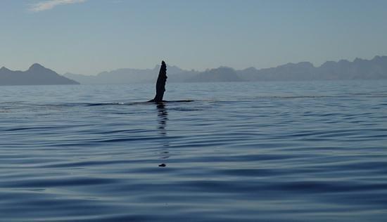 Coco Cabanas Loreto: Humpbacks Whale