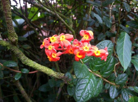 Hoomaluhia Botanical Gardens: A pretty flower