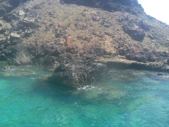 Eagleray Tours: Galapagos Penguin
