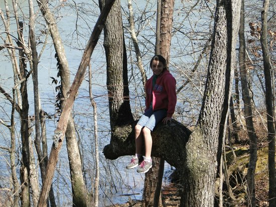 Don Carter State Park: up a tree