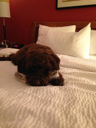 Residence Inn Newark Elizabeth/Liberty International Airport: A very happy puppy!