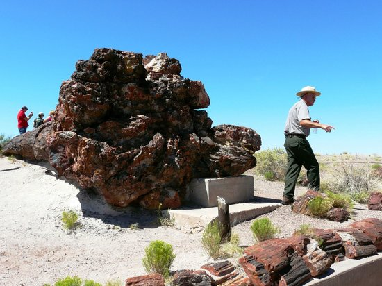 Painted Desert : Roots of Petrified tree