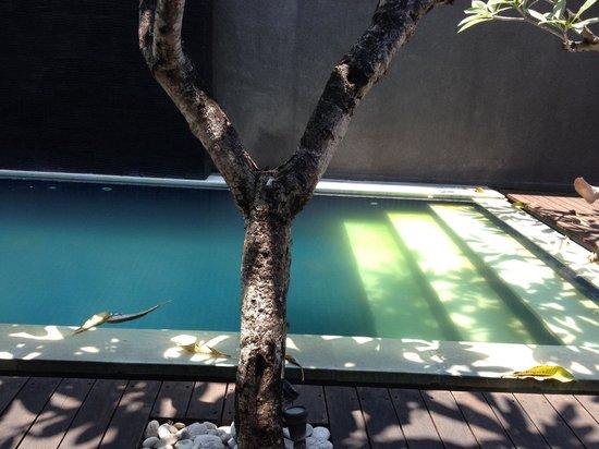 """The Wolas Villas & Spa : Абсолютно не очищенный,мутный бассейн...явно там кто-то """"живет"""".."""
