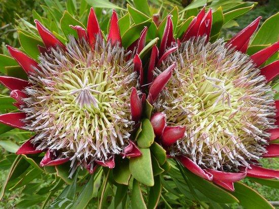 Kula Botanical Garden: Tropical flowers