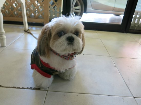 Vanilla Place Guest House: Mr Kem's cute little dog