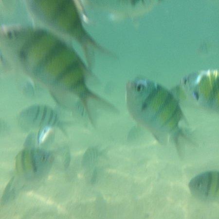 Poda Island : Fish fish everywhere
