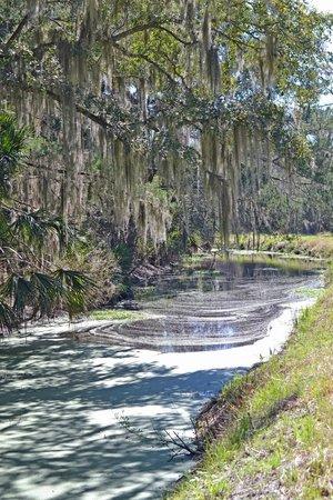 Egan's Creek Greenway: Beautiful Spanish moss hanging over the creek