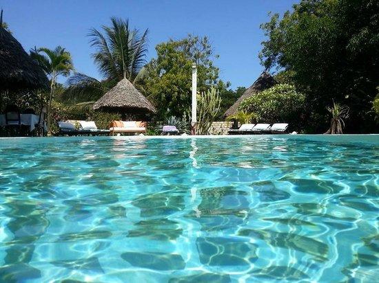 Luna House Malindi Maison d'hotes : la piscine de Luna house