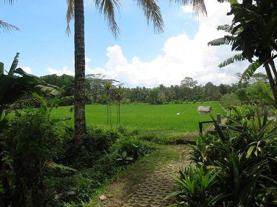 Warung Pulau Kelapa : Looking towards rice fields