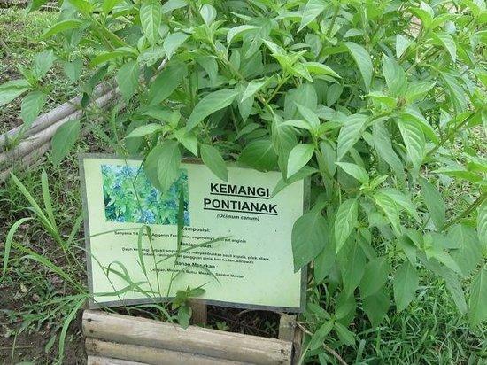 Warung Pulau Kelapa : labels in plant beds