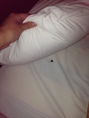 The Continental Hotel: Dead fly under my pillow