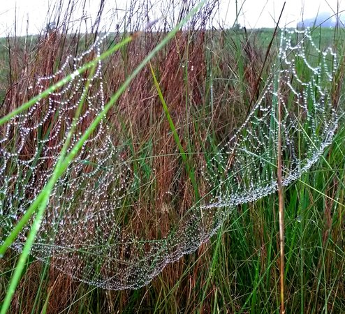 Umgeni Valley Enviromental Education Center : Spiders web early morning after rain