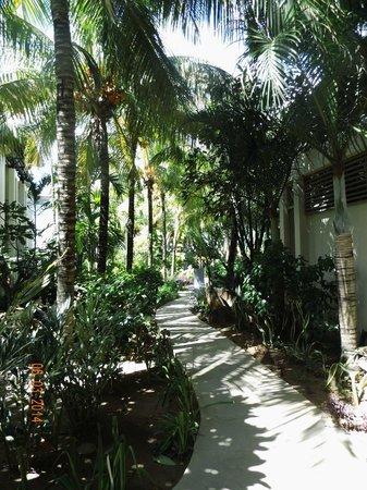 Blumarine Attitude: jardin tropical de l'hôtel
