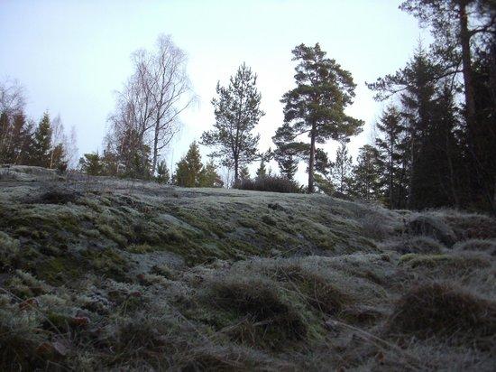 Sörmlandsleden: A cold November morning