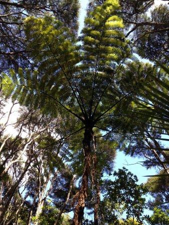 Onetangi Forest and Bird Reserve: Fern