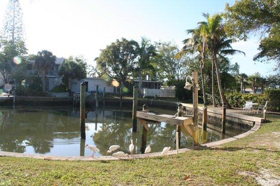 Hidden Harbor Suites: Oiseaux picorants aux portes de notre terrasse
