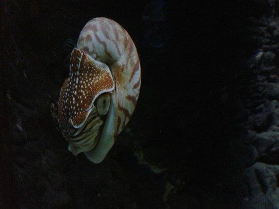 Blue Reef Aquarium: Odd creature